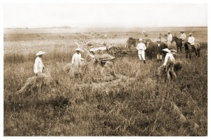 Escuela Agropecuaría